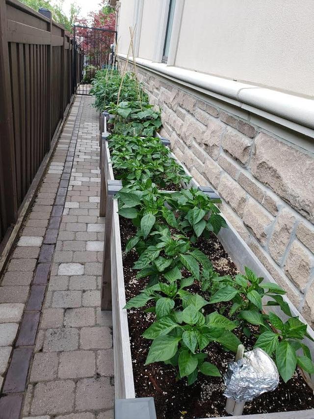 Tận dụng khoảng không nhỏ xíu bên hông nhà, bà mẹ 4 con đã tạo nên khu vườn đầy ắp rau sạch mát mắt - Ảnh 14.
