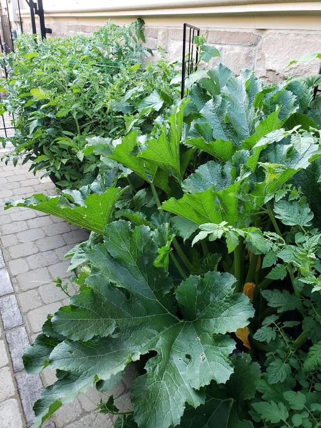 Tận dụng khoảng không nhỏ xíu bên hông nhà, bà mẹ 4 con đã tạo nên khu vườn đầy ắp rau sạch mát mắt - Ảnh 15.