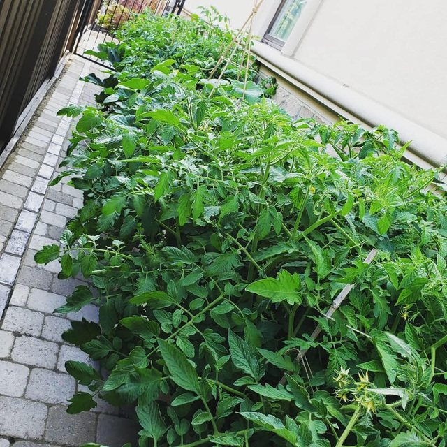 Tận dụng khoảng không nhỏ xíu bên hông nhà, bà mẹ 4 con đã tạo nên khu vườn đầy ắp rau sạch mát mắt - Ảnh 16.