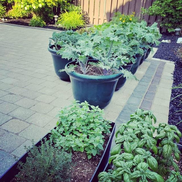 Tận dụng khoảng không nhỏ xíu bên hông nhà, bà mẹ 4 con đã tạo nên khu vườn đầy ắp rau sạch mát mắt - Ảnh 17.