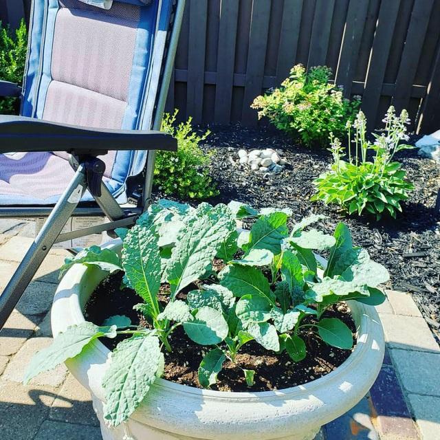 Tận dụng khoảng không nhỏ xíu bên hông nhà, bà mẹ 4 con đã tạo nên khu vườn đầy ắp rau sạch mát mắt - Ảnh 18.