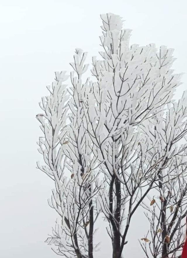 منطقه مرزی Binh Lieu در یخ و برف بسیار زیبا است - عکس 5.