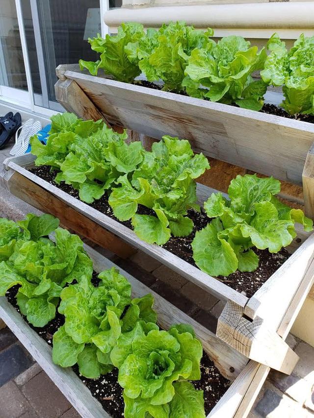 Tận dụng khoảng không nhỏ xíu bên hông nhà, bà mẹ 4 con đã tạo nên khu vườn đầy ắp rau sạch mát mắt - Ảnh 6.