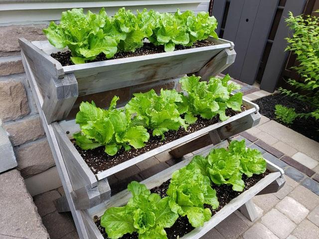 Tận dụng khoảng không nhỏ xíu bên hông nhà, bà mẹ 4 con đã tạo nên khu vườn đầy ắp rau sạch mát mắt - Ảnh 7.