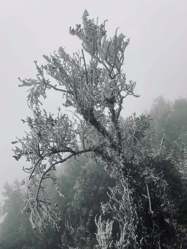 منطقه مرزی Bình Liêu زیبا و مسحور شده در یخ و برف است - عکس 7.