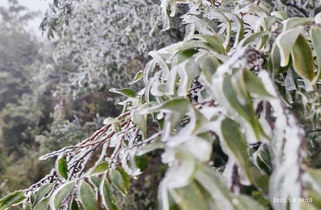 منطقه مرزی Binh Lieu زیبا و مسحور برف و یخ است - عکس 10.