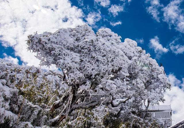 Du khách thích thú với khung cảnh tuyết phủ trắng tuyệt đẹp ngày cuối năm trên đỉnh Fansipan - Ảnh 13.