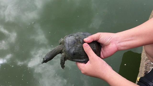 Phóng sinh cá chép hay rùa trong lễ cúng Táo? - Ảnh 3.