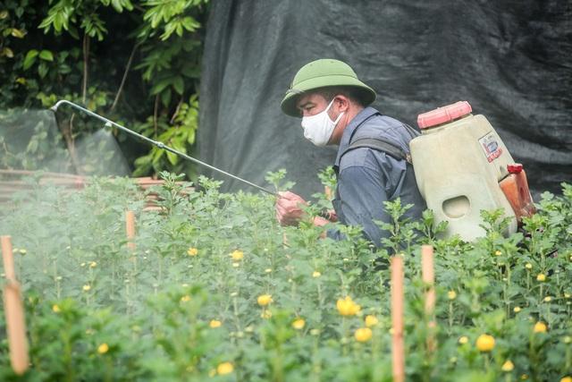 Ruộng hoa khô héo vì không bán được, dân trồng hoa gạt nước mắt cắt bỏ - Ảnh 13.