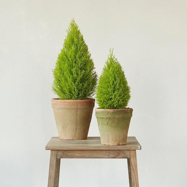9 loại cây thanh lọc không khí trong nhà tốt nhất mà lại rất dễ trồng - Ảnh 1.