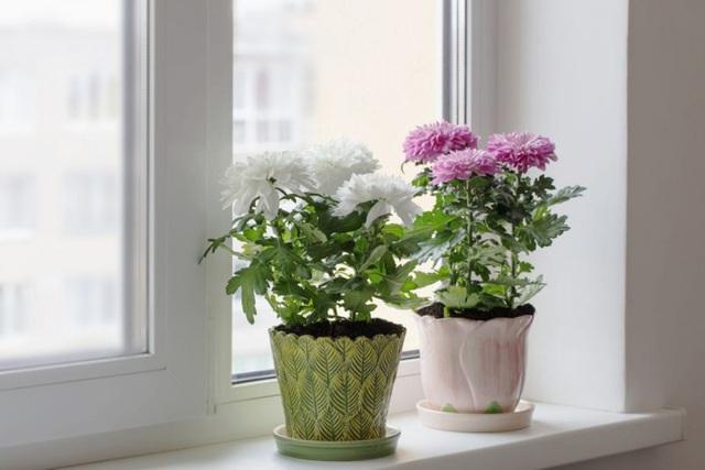 9 loại cây thanh lọc không khí trong nhà tốt nhất mà lại rất dễ trồng - Ảnh 2.