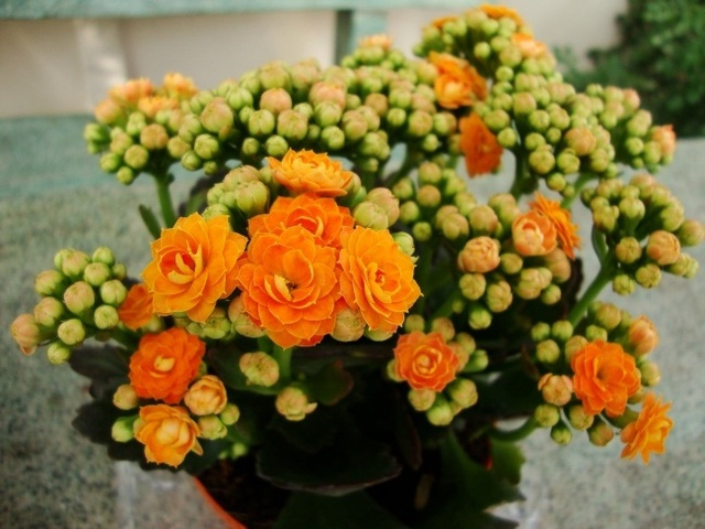 9 loại cây thanh lọc không khí trong nhà tốt nhất mà lại rất dễ trồng - Ảnh 5.