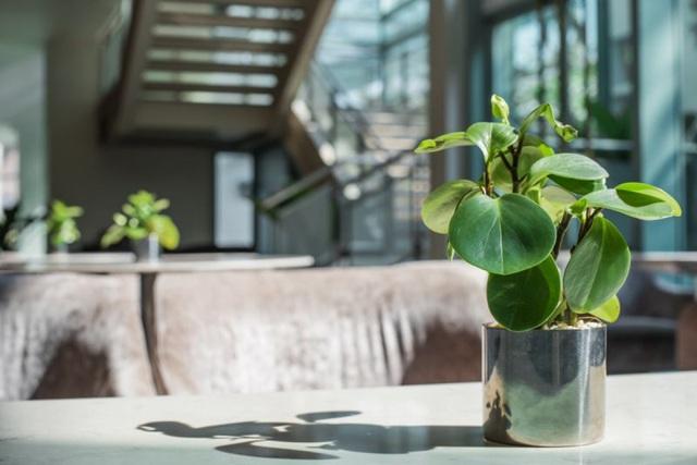 9 loại cây thanh lọc không khí trong nhà tốt nhất mà lại rất dễ trồng - Ảnh 6.