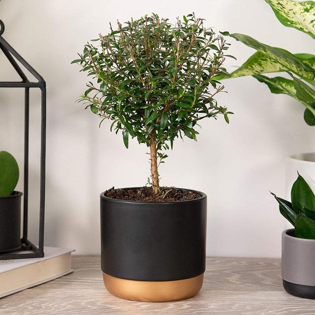 9 loại cây thanh lọc không khí trong nhà tốt nhất mà lại rất dễ trồng - Ảnh 7.