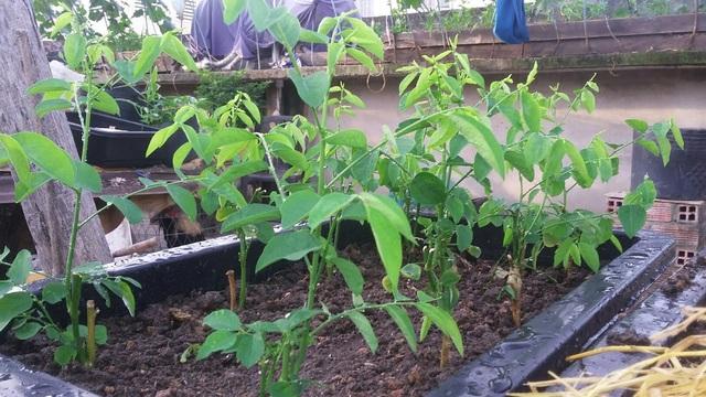 10 loại rau thích hợp để bạn có thể trồng vào tháng 4 - Ảnh 1.