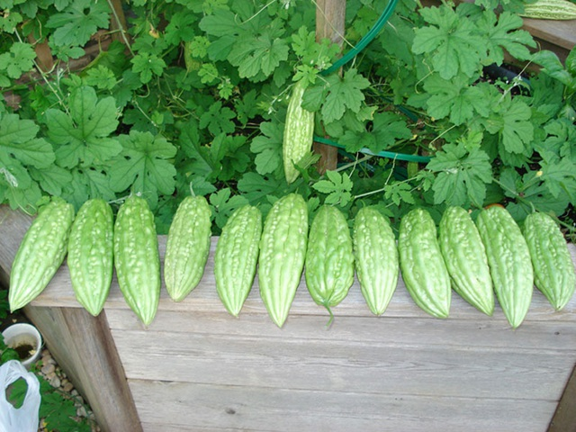 10 loại rau thích hợp để bạn có thể trồng vào tháng 4 - Ảnh 2.