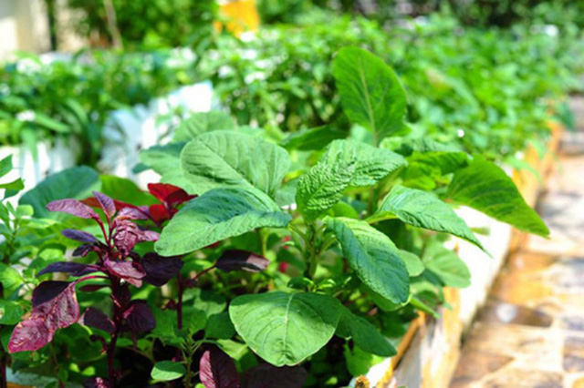 10 loại rau thích hợp để bạn có thể trồng vào tháng 4 - Ảnh 3.