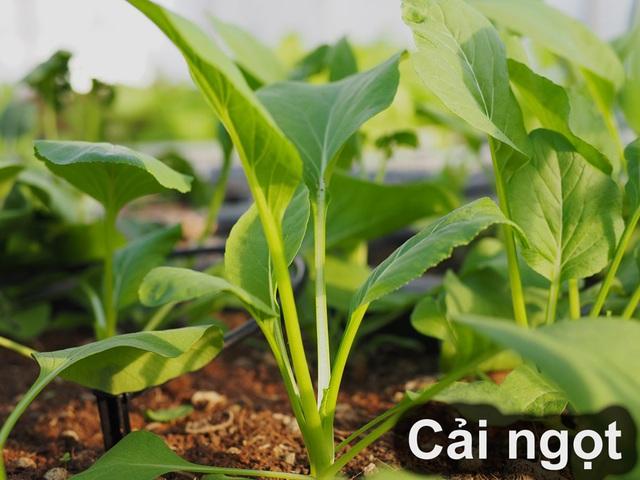 10 loại rau thích hợp để bạn có thể trồng vào tháng 4 - Ảnh 5.