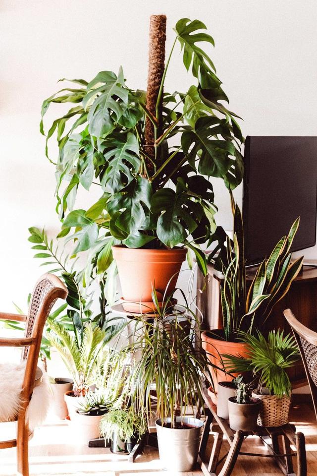 Lợi ích bất ngờ của việc trồng cây trong nhà - Ảnh 3.