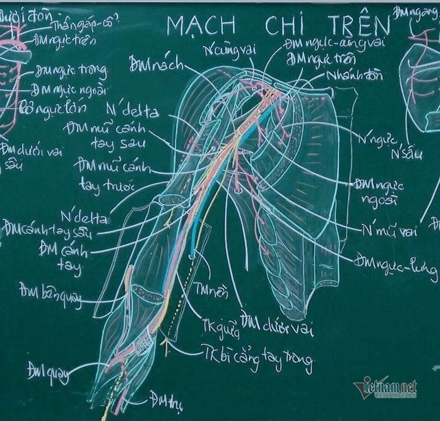 Thầy giáo giải phẫu lên lớp chỉ với… hộp phấn màu - Ảnh 2.