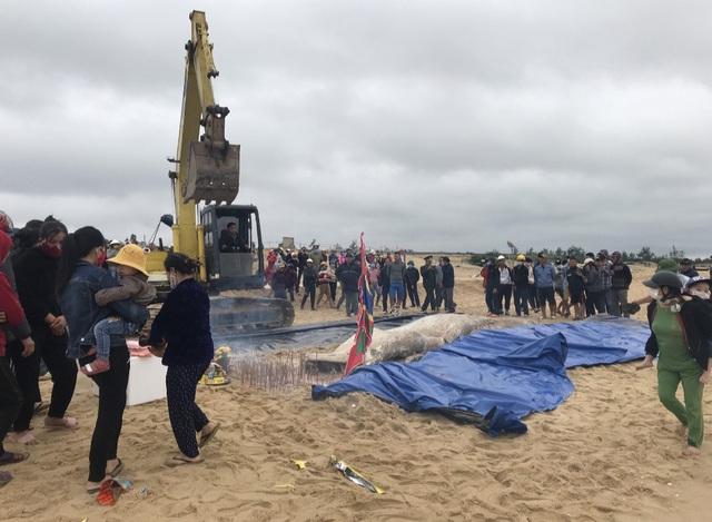 Xác cá voi khủng trôi dạt vào bờ biển Quảng Bình - Ảnh 1.
