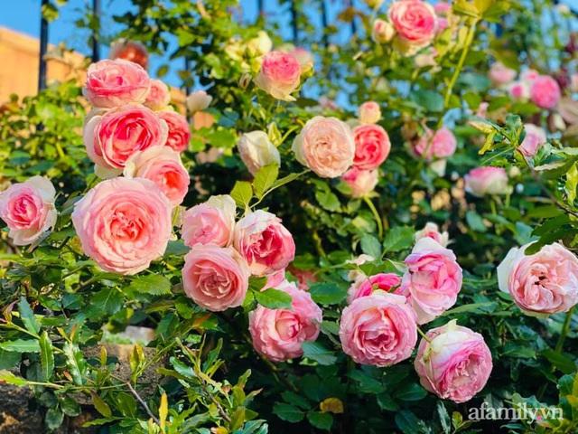 Khu vườn muôn hoa khoe sắc tỏa hương của mẹ Việt thức đêm chăm cây  - Ảnh 1.
