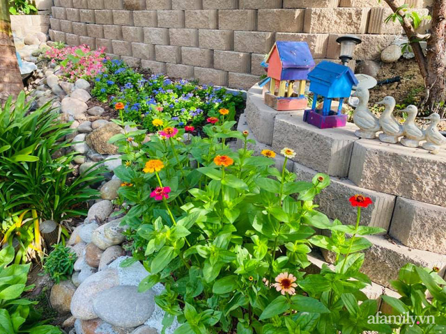 Khu vườn muôn hoa khoe sắc tỏa hương của mẹ Việt thức đêm chăm cây  - Ảnh 14.
