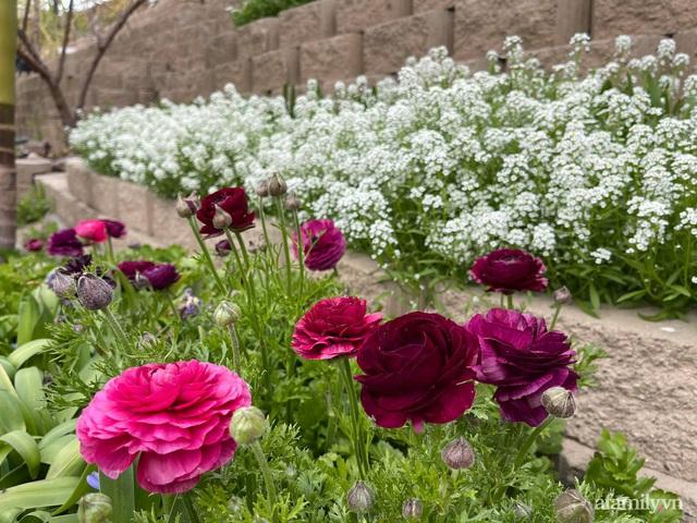 Khu vườn muôn hoa khoe sắc tỏa hương của mẹ Việt thức đêm chăm cây  - Ảnh 18.