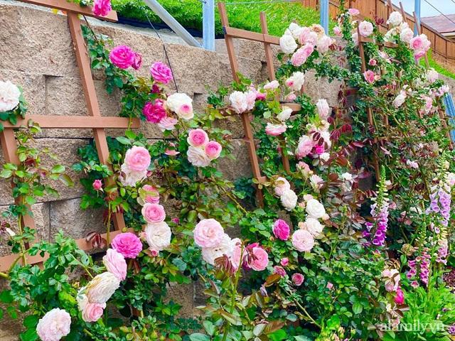Khu vườn muôn hoa khoe sắc tỏa hương của mẹ Việt thức đêm chăm cây  - Ảnh 19.