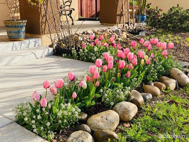 Khu vườn muôn hoa khoe sắc tỏa hương của mẹ Việt thức đêm chăm cây  - Ảnh 23.