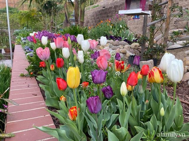 Khu vườn muôn hoa khoe sắc tỏa hương của mẹ Việt thức đêm chăm cây  - Ảnh 24.