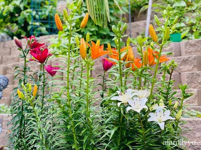 Khu vườn muôn hoa khoe sắc tỏa hương của mẹ Việt thức đêm chăm cây  - Ảnh 26.
