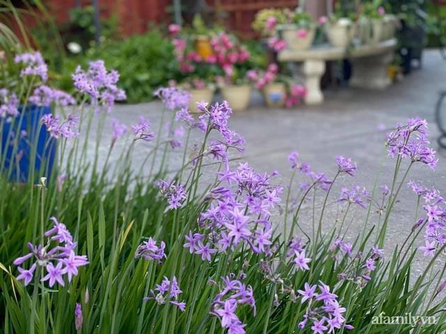 Khu vườn muôn hoa khoe sắc tỏa hương của mẹ Việt thức đêm chăm cây  - Ảnh 30.
