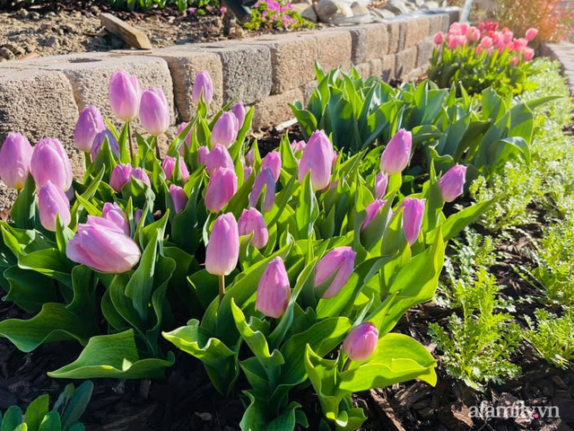 Khu vườn muôn hoa khoe sắc tỏa hương của mẹ Việt thức đêm chăm cây  - Ảnh 4.