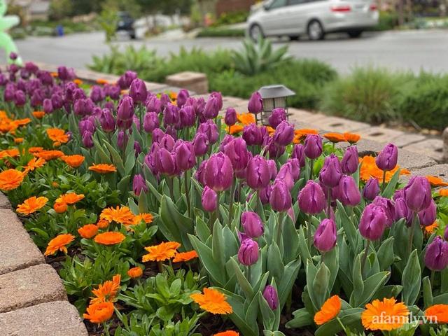 Khu vườn muôn hoa khoe sắc tỏa hương của mẹ Việt thức đêm chăm cây  - Ảnh 5.