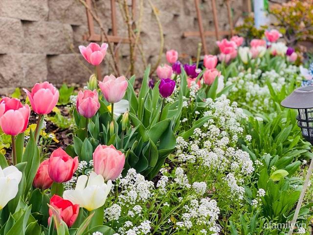 Khu vườn muôn hoa khoe sắc tỏa hương của mẹ Việt thức đêm chăm cây  - Ảnh 6.