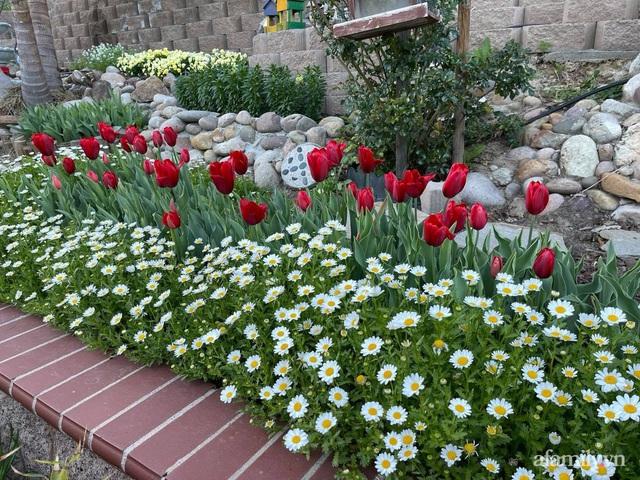 Khu vườn muôn hoa khoe sắc tỏa hương của mẹ Việt thức đêm chăm cây  - Ảnh 9.