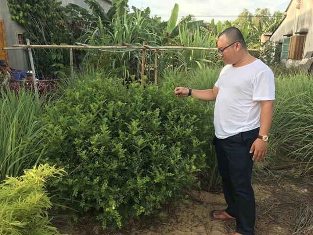 Bất ngờ những loại cây leo bờ rào nông dân kiếm tiền triệu - Ảnh 9.