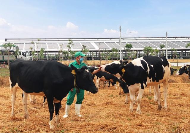 Liên tiếp thăng hạng, Vinamilk là đại diện duy nhất của Việt Nam & Đông Nam Á trong 50 công ty sữa hàng đầu thế giới - Ảnh 5.