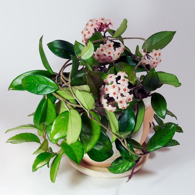 6 نوع گیاه زینتی به هر اتاق خانه شما کمک می کند تا در تابستان خنک و دلپذیر شود - عکس 1.