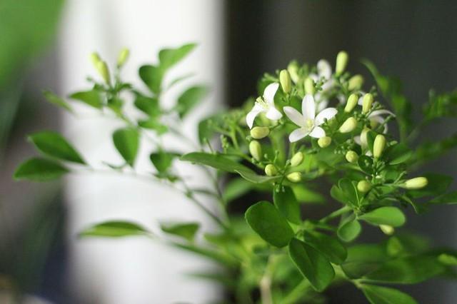 6 نوع گیاه زینتی هر اتاق خانه شما را در تابستان خنک و دلپذیر می کند - عکس 3.