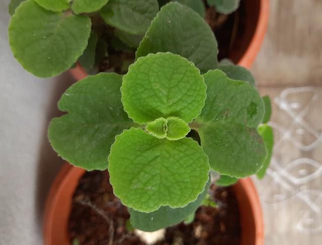 6 نوع گیاه زینتی به هر اتاق خانه شما کمک می کند تا در تابستان خنک و دلپذیر شود - عکس 4.