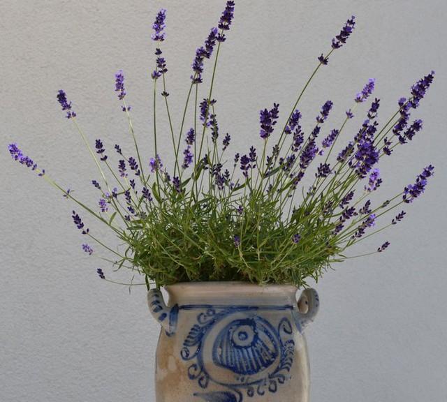 6 نوع گیاه زینتی برای ایجاد هر اتاق در خانه شما در تابستان خنک و دلپذیر - عکس 6.
