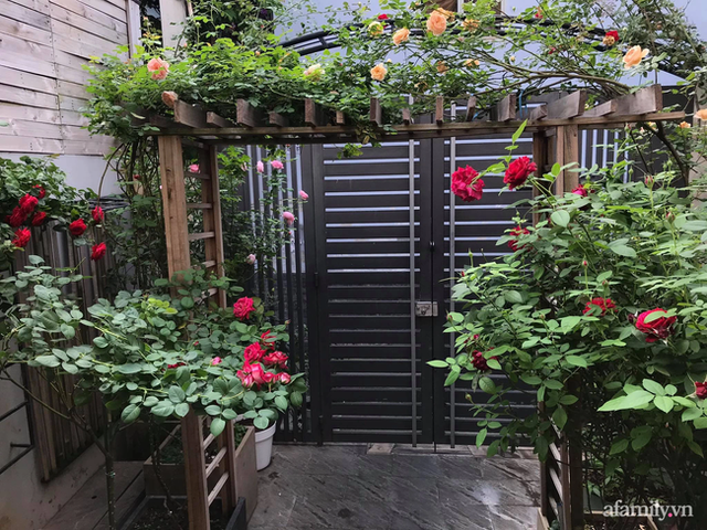 Vườn hồng rực rỡ tỏa sắc hương trước sân nhà đón hè sang của cặp vợ chồng trẻ Sài Gòn - Ảnh 1.