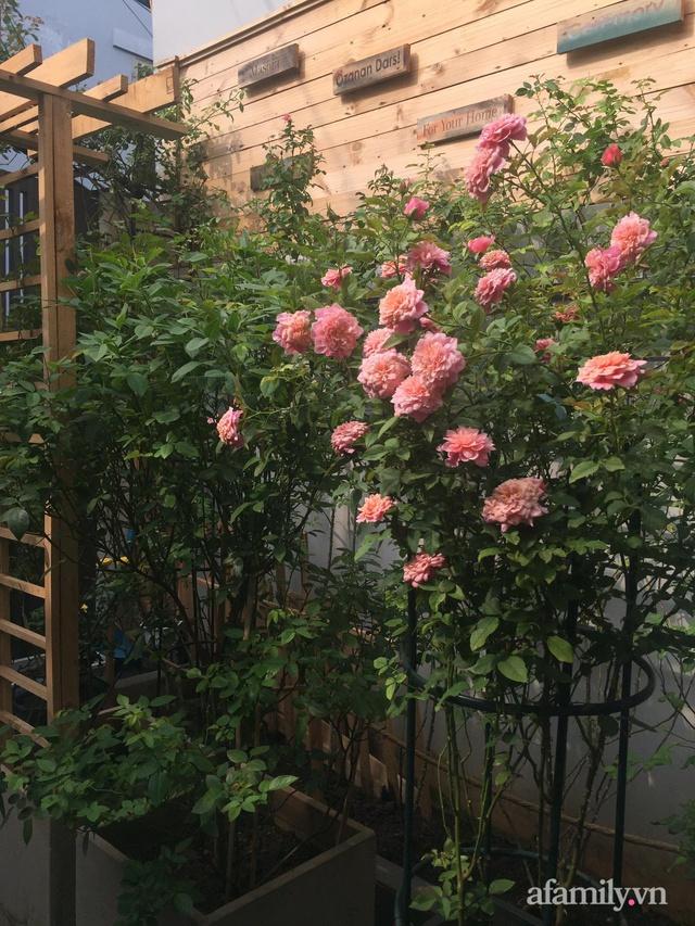 Vườn hồng rực rỡ tỏa sắc hương trước sân nhà đón hè sang của cặp vợ chồng trẻ Sài Gòn - Ảnh 11.