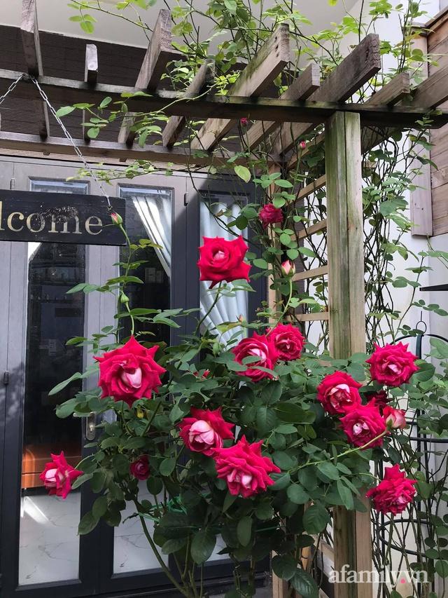 Vườn hồng rực rỡ tỏa sắc hương trước sân nhà đón hè sang của cặp vợ chồng trẻ Sài Gòn - Ảnh 13.