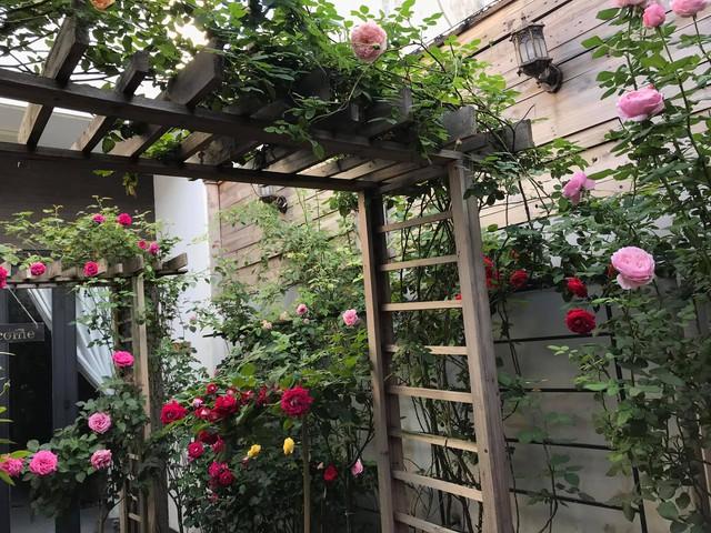 Vườn hồng rực rỡ tỏa sắc hương trước sân nhà đón hè sang của cặp vợ chồng trẻ Sài Gòn - Ảnh 15.