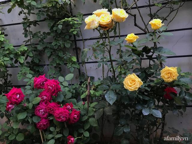 Vườn hồng rực rỡ tỏa sắc hương trước sân nhà đón hè sang của cặp vợ chồng trẻ Sài Gòn - Ảnh 16.
