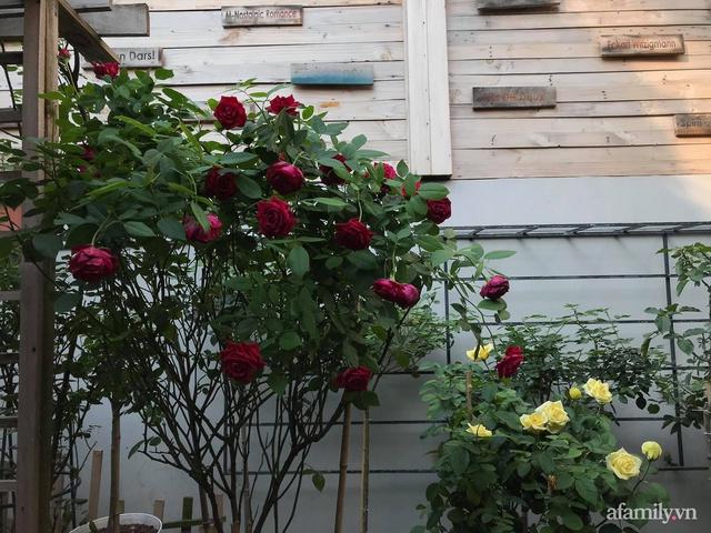 Vườn hồng rực rỡ tỏa sắc hương trước sân nhà đón hè sang của cặp vợ chồng trẻ Sài Gòn - Ảnh 17.