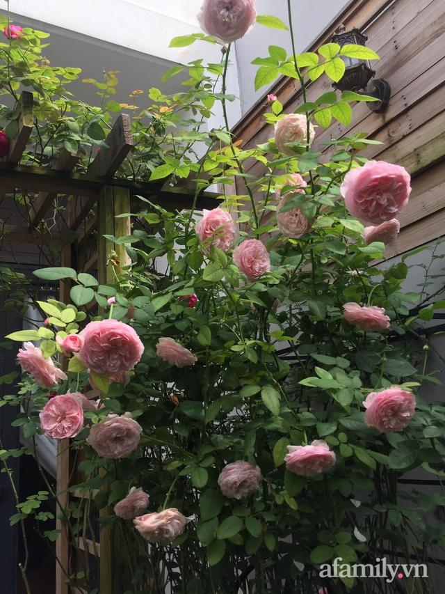 Vườn hồng rực rỡ tỏa sắc hương trước sân nhà đón hè sang của cặp vợ chồng trẻ Sài Gòn - Ảnh 20.